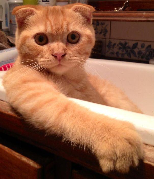 水が好き?なネコちゃん その2